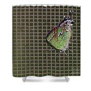 Hessel's Hairstreak Butterfly Shower Curtain
