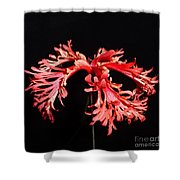 Hibiscus 1 Shower Curtain