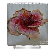 Hibiscus 3 Shower Curtain