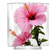 Hibiscus 7 V2 Shower Curtain