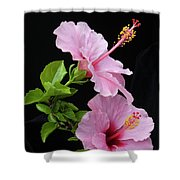 Hibiscus 7 V4 Shower Curtain