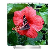 Hibiscus And Butterfly Diners Shower Curtain