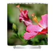 Hibiscus Bloom Shower Curtain