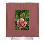 Hibiscus Bloom Closed In The Rain   End View      May           Indiana      Shower Curtain