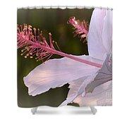 Hibiscus Bloom Pastel Shower Curtain