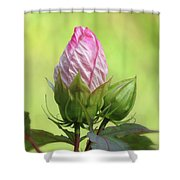 Hibiscus Bud Beauty Shower Curtain