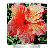 Hibiscus - Dew Covered - Beauty Shower Curtain