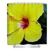 Hibiscus Flower 1 Shower Curtain