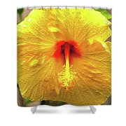 Hibiscus Flower After The Rain Shower Curtain