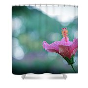 Hibiscus Flower In A Garden Shower Curtain