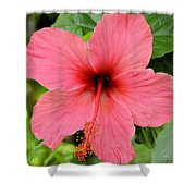 Hibiscus Front Shower Curtain