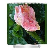 Hibiscus Heaven Shower Curtain