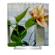 Hibiscus In Bloom Shower Curtain