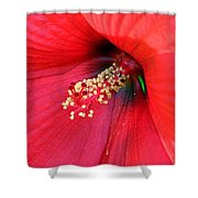 Hibiscus Macro Shower Curtain