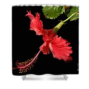 Hibiscus On Black Background Shower Curtain