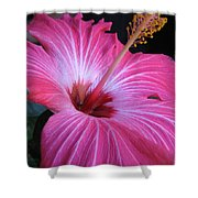 Hibiscus Photograph Shower Curtain
