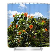 Hibiscus Rosasinensis With Fruit Shower Curtain