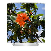 Hibiscus Rosasinensis With Fruit On The Indian River Shower Curtain