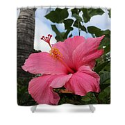 Hibiscus S D Z 1 Shower Curtain