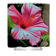 Hibiscus With A Solarize Effect Shower Curtain