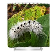 Hickory Tussock Shower Curtain