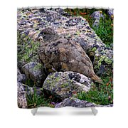 Hidden Ptarmigan Shower Curtain