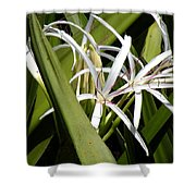 Hidden Swamp Lily Shower Curtain