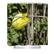 Hidden Yellow Tulip 02 Shower Curtain