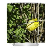 Hidden Yellow Tulip Shower Curtain