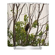Hiding In Plain Sight Shower Curtain