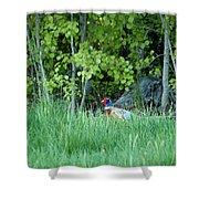 Hiding In The Grass. Pheasant Shower Curtain