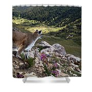 High And Wild Shower Curtain