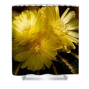 High Angle View Of Cactus Flowers Shower Curtain
