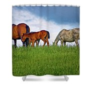 High Browsers Shower Curtain