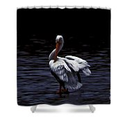 High Contrast Pelican Shower Curtain
