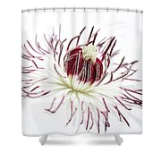 High Key Clematis Shower Curtain
