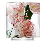 High Key Pink And White Carnation Floral  Shower Curtain