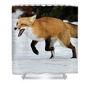 High Speed Fox Shower Curtain
