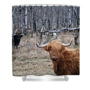 Looking Shaggy Shower Curtain