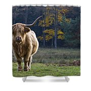 Highland Cow In France Shower Curtain