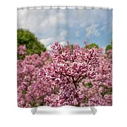 Highland Park Lilacs Detail Rochester Ny Shower Curtain