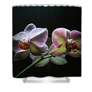 Highlighted Orchids Shower Curtain