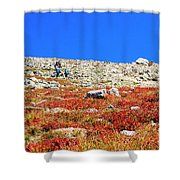 Hikers And Autumn Tundra On Mount Yale Colorado Shower Curtain
