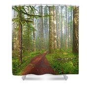 Hiking Trail In Washington State Park Shower Curtain