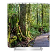 Hiking Trail Through Forest In Lynn Canyon Park Shower Curtain