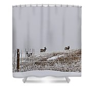 Hills Have Eyes Shower Curtain