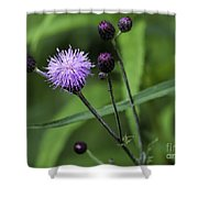 Hill's Thistle Flower And Buds Shower Curtain