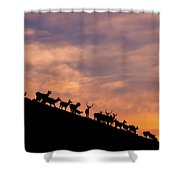 Hillside Elk Shower Curtain