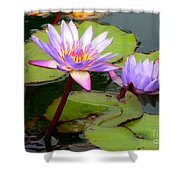 Hilo Water Lily 2 Shower Curtain