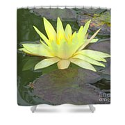 Hilo Water Lily 4 Shower Curtain